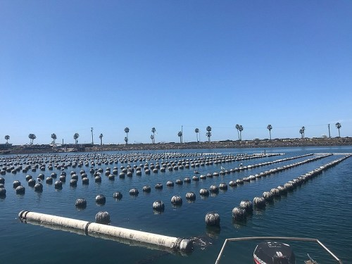 Buoys in the water at the Carlsbad Aquafarm where owners grow oysters and mus...