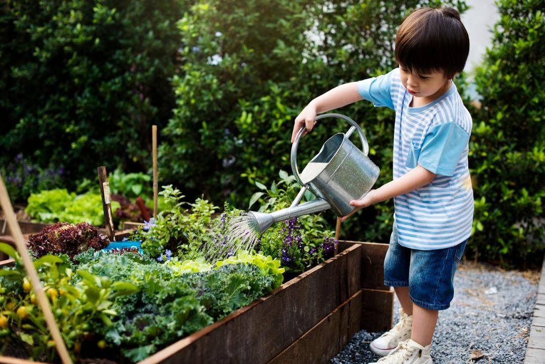 boy watering his vegetable spring garden