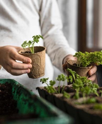 starting the spring growing season at home
