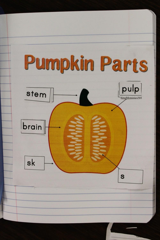 medium resolution of inside of a pumpkin diagram pumpkins and apples data schematic diagram parts of a pumpkin diagram diagram of a pumpkin