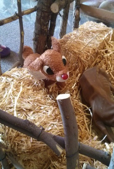 Rudolph in a Nativity Scene