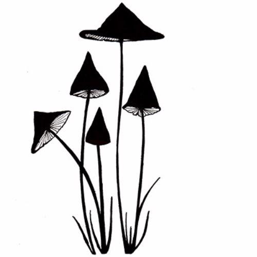 slender-mushrooms-copy