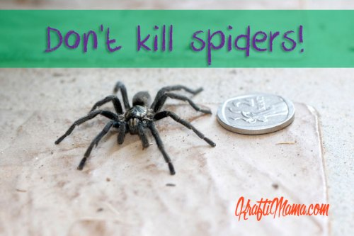 Don't kill spiders!