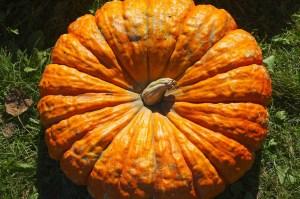 pumpkin-544082_1280