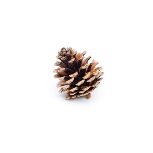 Pinecone Ornament