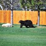 craig bear park 2012