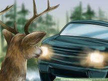 deer-vs-car