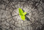 6 лекции што ги научивме со појавата на смртоносниот вирус