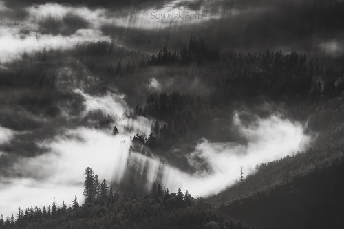 W mglistym lesie
