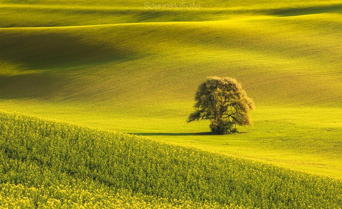 Drzewo wiosna krajobraz