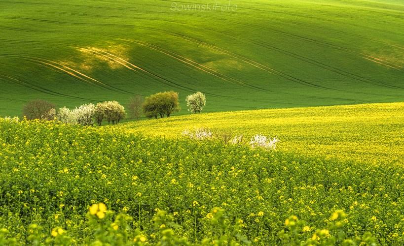 Krajobraz na ścianę wiosna