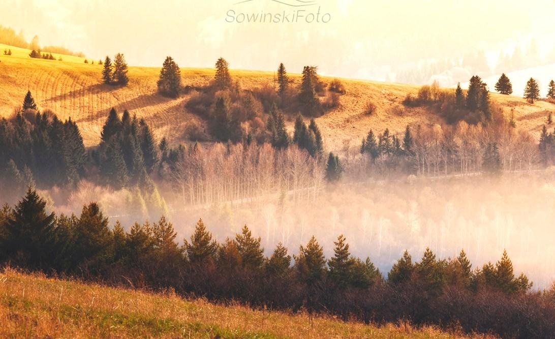 Krajobraz Las zdjęcie na płótnie