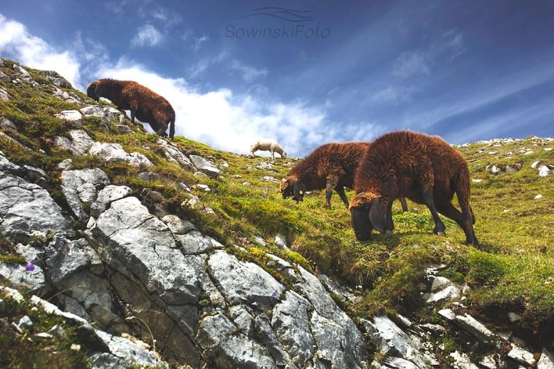 Alpy zdjęcie krajobrazu