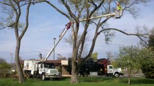 Pruning services safely performed by KTS