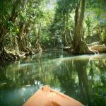 pripravy_na_panamu_krajinou_mangrovu