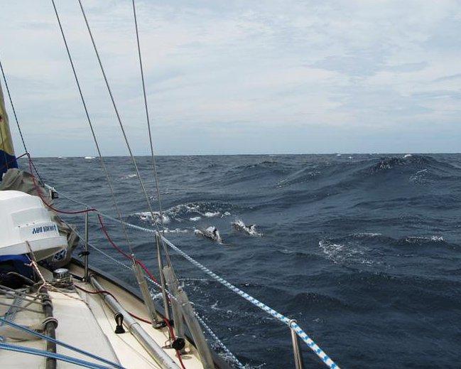 Moře po bouřce se zklidnilo a objevili se delfíni.