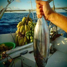 Krásní tuňáci.