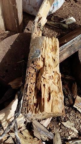 Zničené trámy
