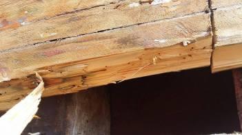 co udělá slaná voda dřevu