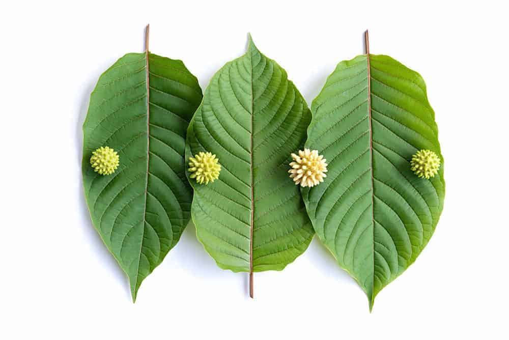 Tres hojas de kratom