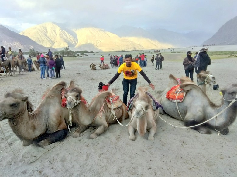 Double humped Bactrian camel ride in Hunder Desert Ladakh