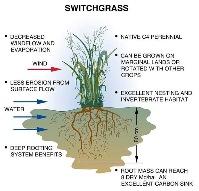 bio-switchgrass