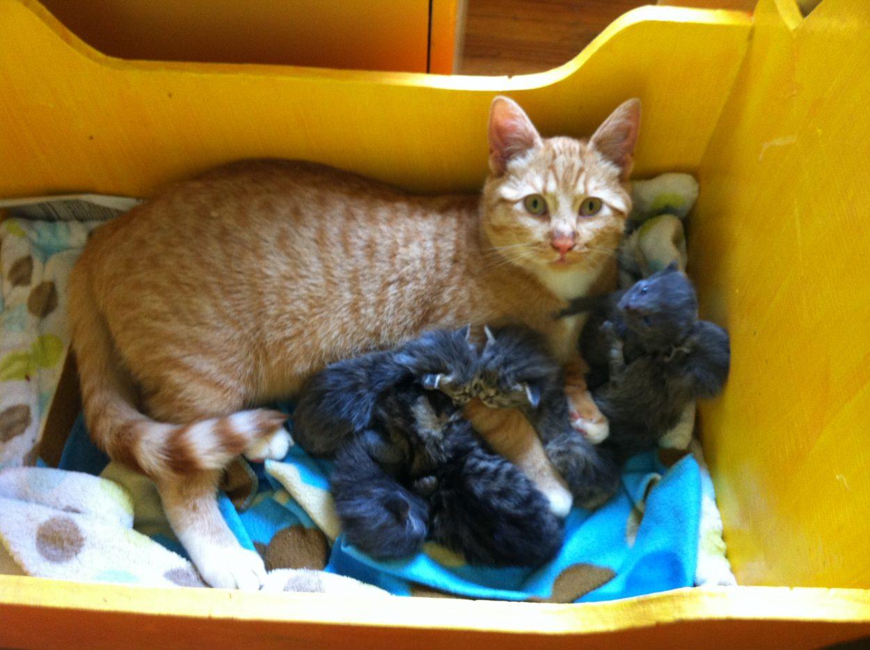 Male cat nurtures litter of abandoned kittens  KRBD
