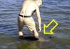 Ušao u vodu i osjetio nešto čudno: Nešto mu se vrtilo oko nogu dok nije shvatio šta je to zapravo (Video)!