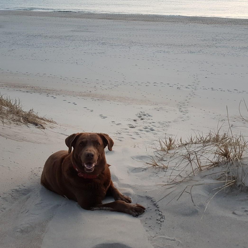 Amy liebt das Meer und die langen Spaziergänge am Strand.