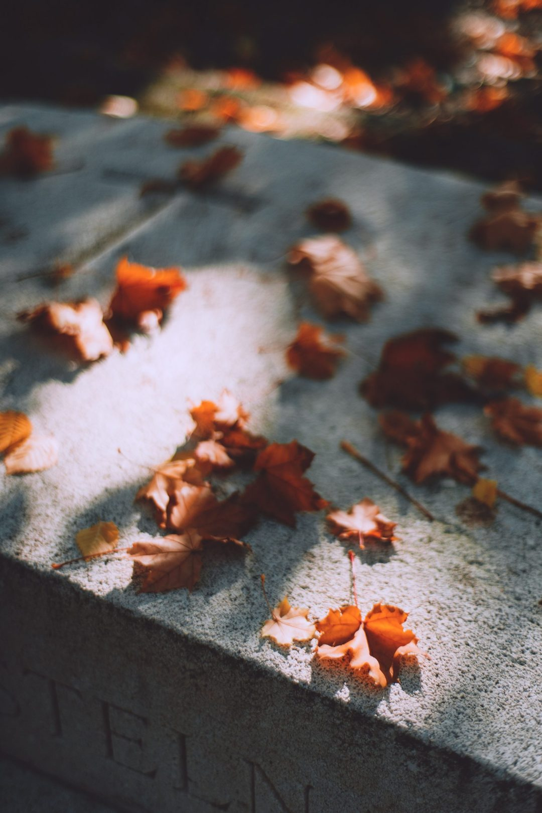 dried leaves on a concrete pavement