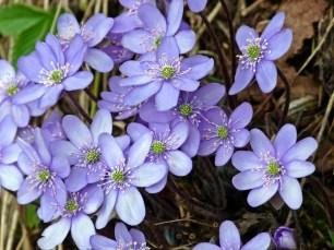 Der Frühling kommt :)