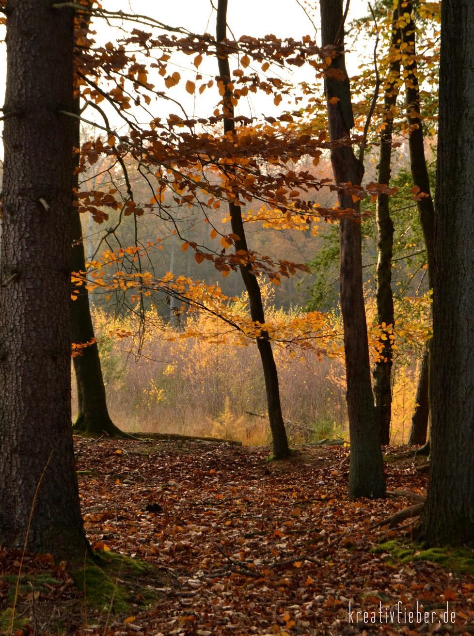 Herbstfotos machen  den richtigen Moment nicht verpassen