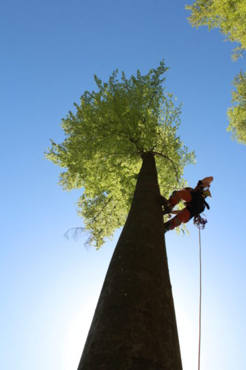 Climb on a tree