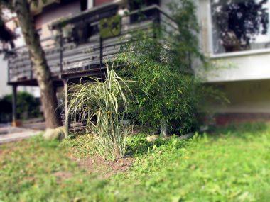 Bambusi pod terasom