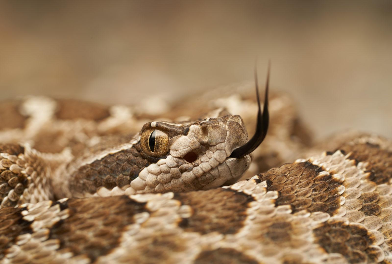 Jenis ular 1