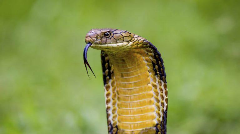 Jenis ular 3