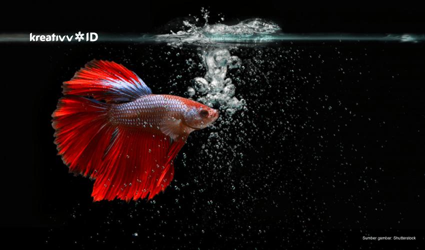 tip memelihara ikan cupang