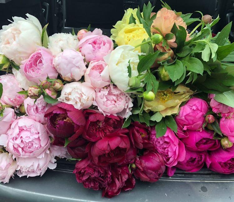 pemilihan jenis bunga