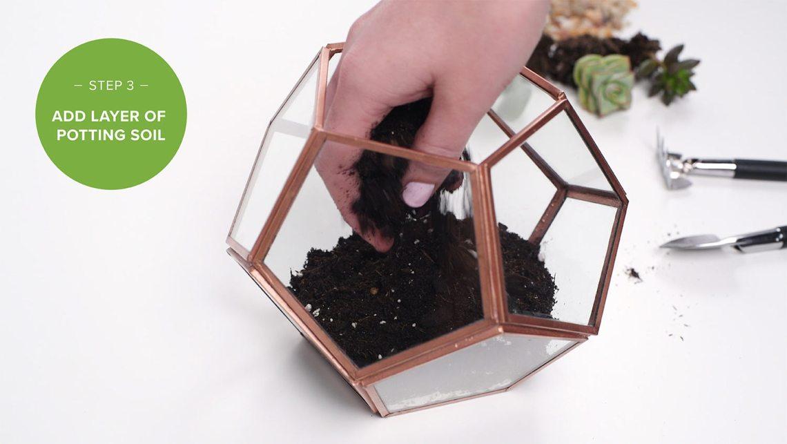 Langkah Ketiga proses pembuatan terrarium