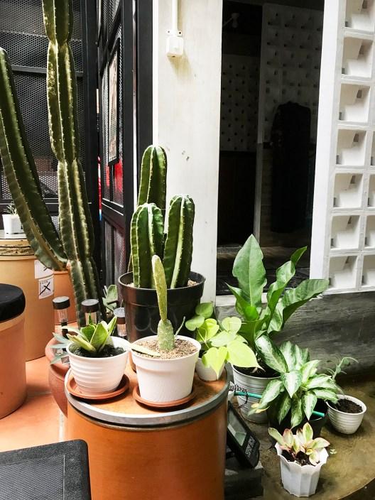 tanaman-dalam-ruang