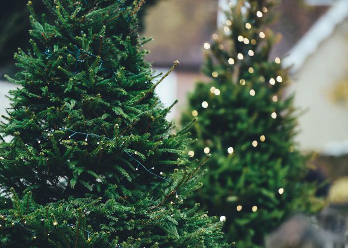 1-tradisi-menghias-pohon-natal