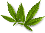 Cannabis bei Krebs