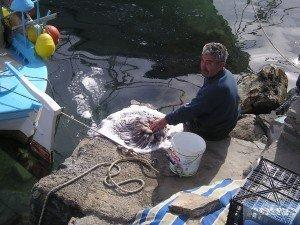 Tintenfisch entgiften