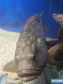 Aqua World Chersonissos