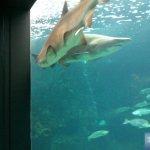 Crete Aquarium
