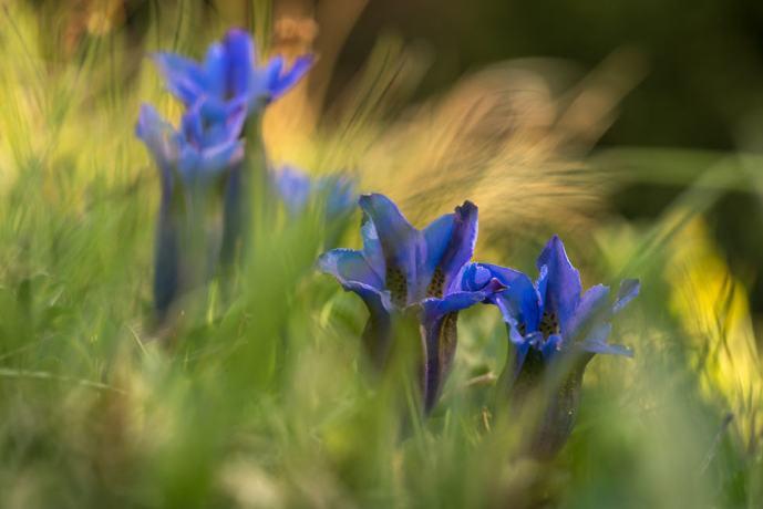 Springtime Werdenfels