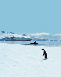 Antarktis entdecken mit PONANT (c) Ponant