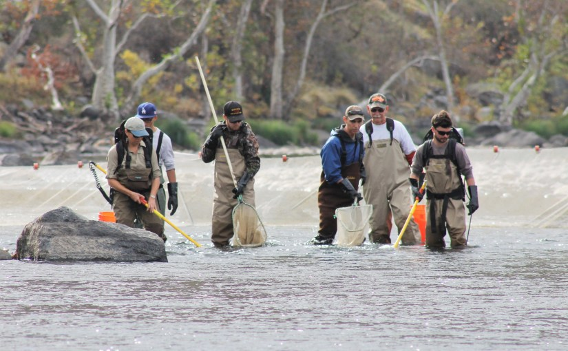 It's that time of year again…join us for the Kings River fish population survey!