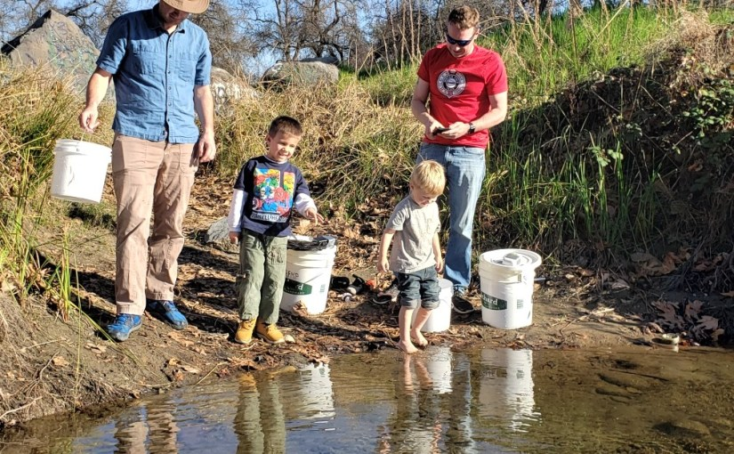 Thousands of trout fry settle into new home in Kings River