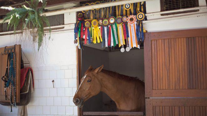 080615-Horse-Hipica-Brasileira-PI-CH.vadapt.664.high.86